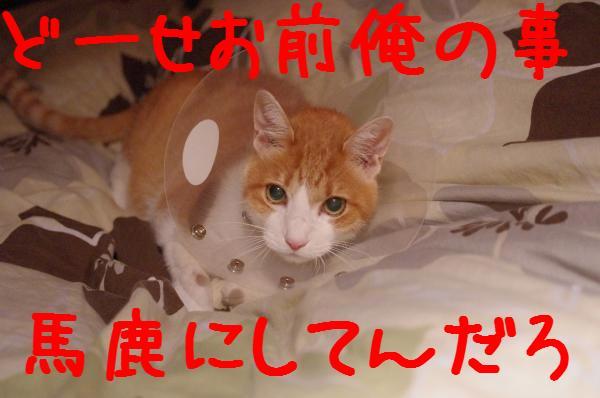 3_20111126220759.jpg