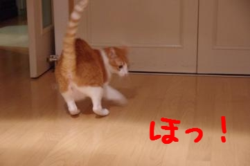 4_20110906233008.jpg