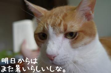 5_20110724081011.jpg