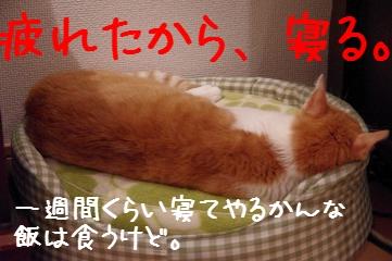 8_20110906233007.jpg