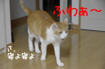 RES06059.jpg