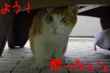RES06088.jpg