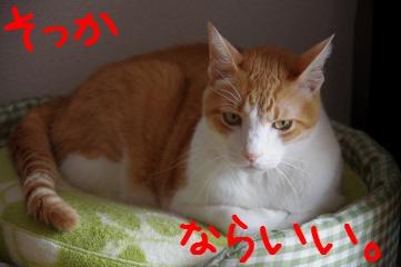 RES06096.jpg