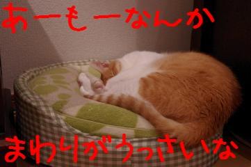RES06218.jpg