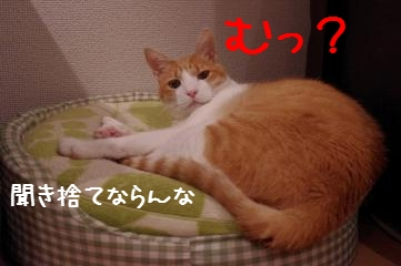 RES06219.jpg