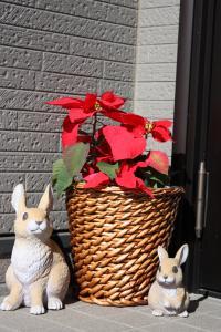 ポインセチアとウサギ