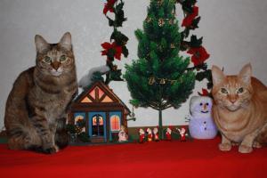 クリスマス飾りの前で