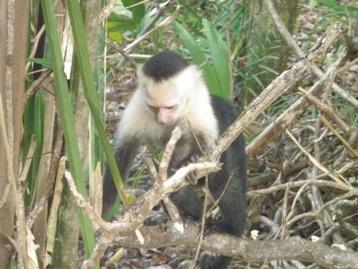 COSTA RICA11