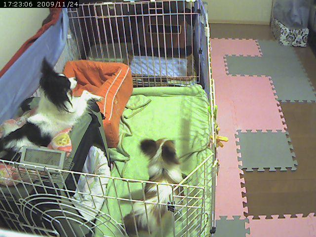 video_20091124172831.jpg