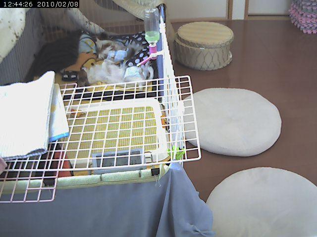video_20100208124941.jpg