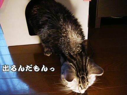 猫家、出る