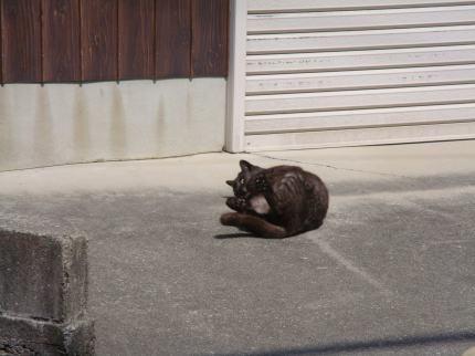ゴロゴロ続く黒猫