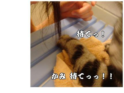 髪、待て!!