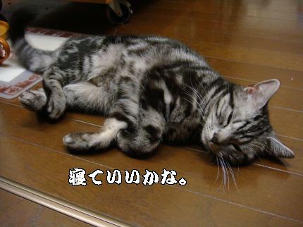 寝ちゃうの