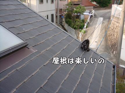 屋根楽しい