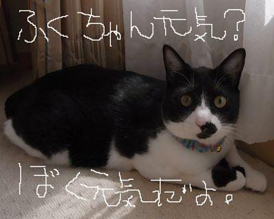 izumi5_R.jpg
