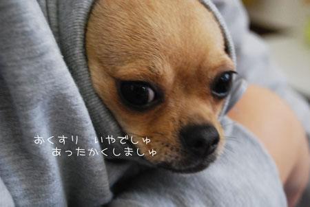 01_20091120081052.jpg