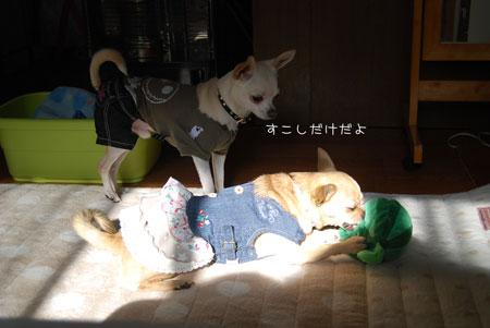 02_20100119180850.jpg