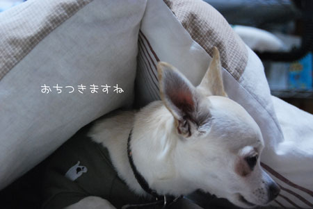04_20100109142139.jpg
