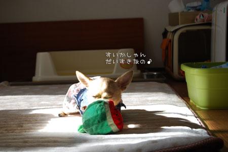 05_20100119180849.jpg