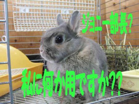 羅夢ちゃん 3