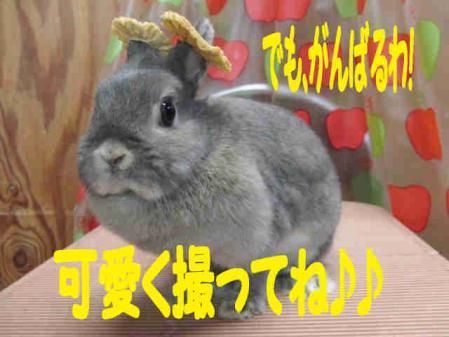 羅夢 ちゃん 7