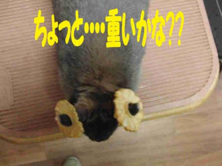 羅夢 ちゃん 6