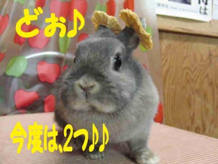 羅夢 ちゃん 5