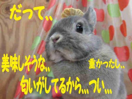 羅夢 ちゃん 10