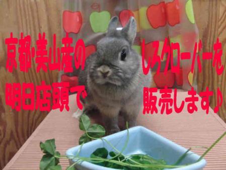 羅夢 ちゃん 3