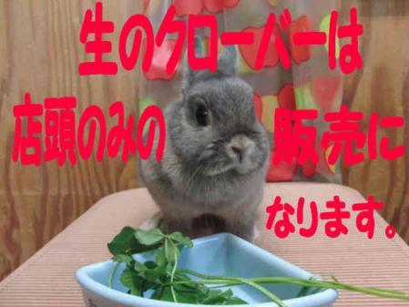 羅夢 ちゃん 4