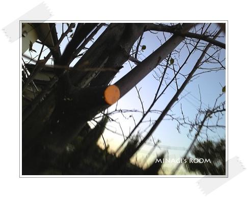 20101119 (16)のコピー
