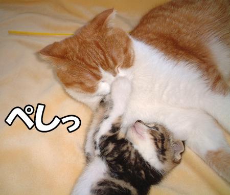 100222_リキと幸太郎1