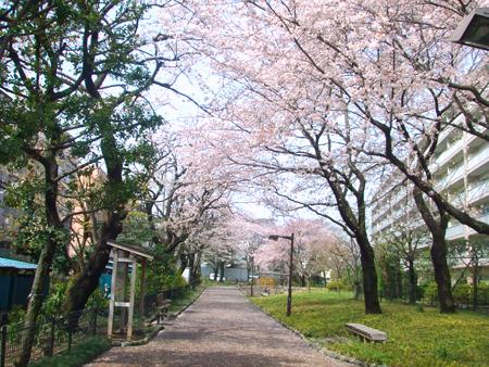 100407_桜2