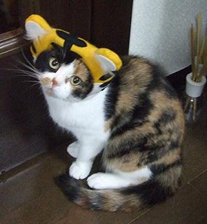 100529_猫会05