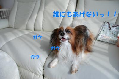 DSC_6349.png