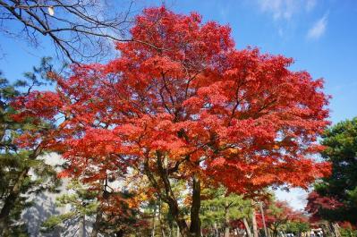 建仁寺の紅葉♪