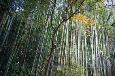 竹林もありますよ♪