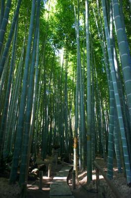 見事な竹です♪