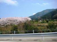 10.4.5 高速道路からの桜