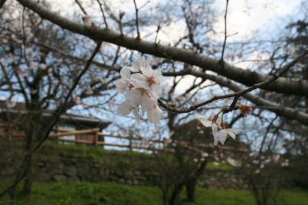 20100321sakura+077_convert_20100322093407.jpg