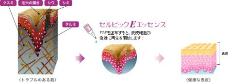 EGFの肌効果1