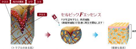 FGFの肌効果1