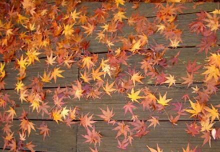 デッキの紅葉