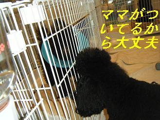 2010_0130(010).jpg