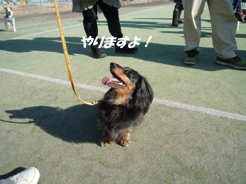 P1050685_convert_20100129223558.jpg