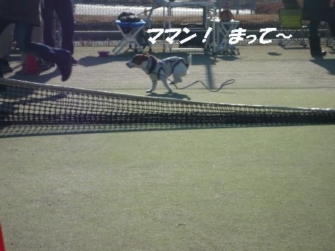 P1050698_convert_20100206220800.jpg