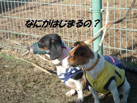 P1050703_convert_20100206215923.jpg