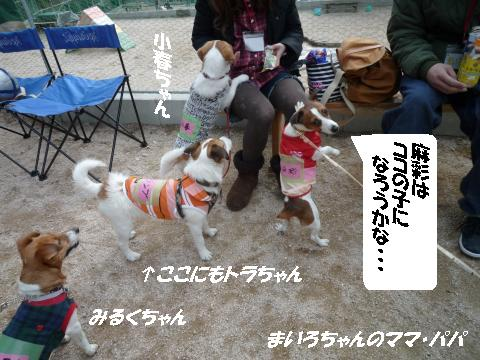 P1060345_convert_20100420091809.jpg