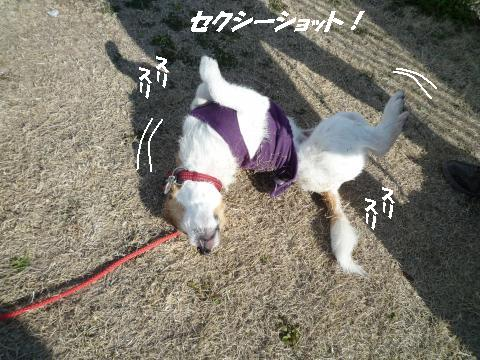P1060415_convert_20100528003805.jpg